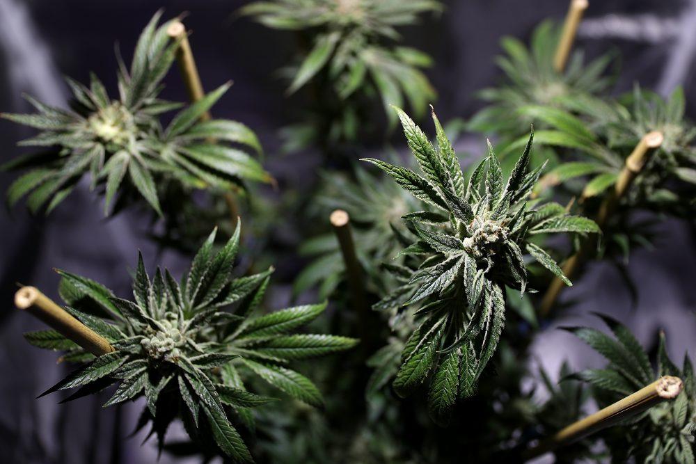 Wall Street Aims To Make Green From Legal Marijuana